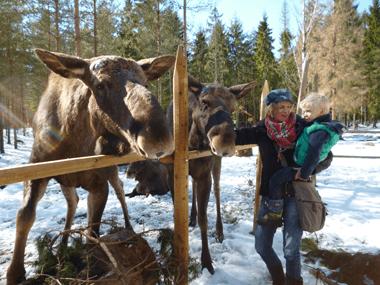 Hallebäck Stugor & Vildmark Camping
